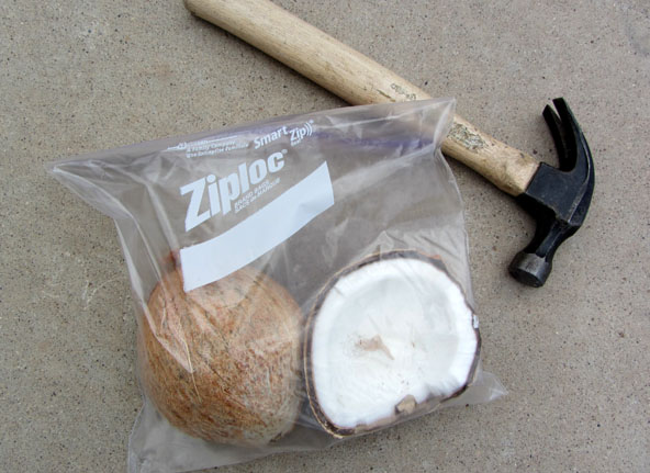 Breaking open a coconut shell