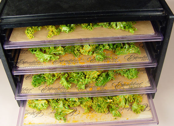 Kale chips in the Excalibur dehydrator